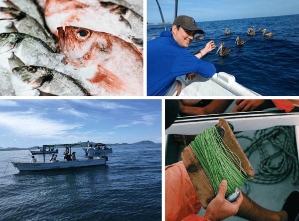 Collage Fishing LP