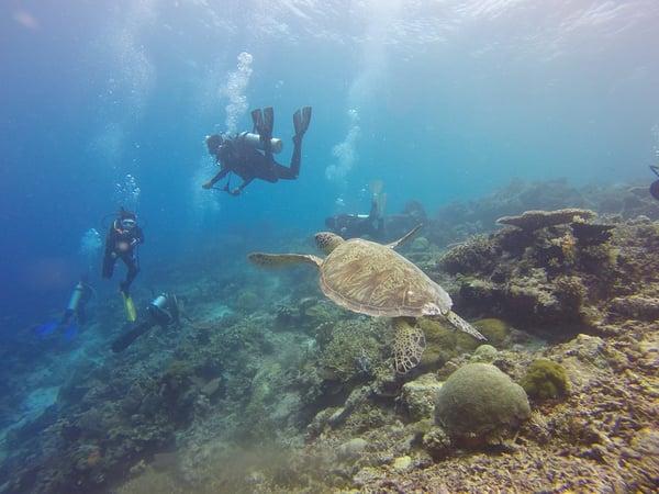 scuba-diving-1300852_960_720